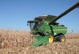 Corn finally started!