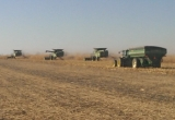 Harvest done with, finished before the snow & cold weather took over.